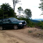 Forester indaforest